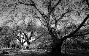 木々の中を歩くカップル