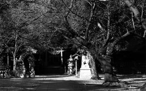 岩槻久伊豆神社の参道