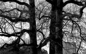 大木の下にひとりで佇む女性