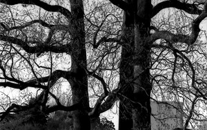 Woman Standin Under The Big Tree Alone