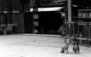 仲良くお座りする二匹の犬