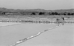 Water-laden Paddies In Muang Sing