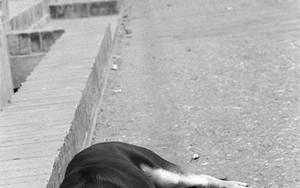 道端で犬は寝る