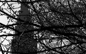 新宿御苑から見えるビル