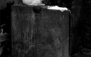 塀の上の猫と地べたに寝そべる猫