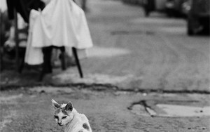 Cat Looked Back By The Wayside
