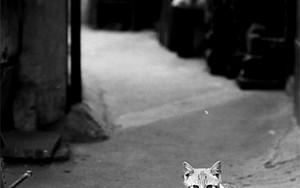 Lean Cat Stares