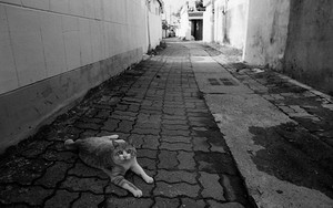 Surprising Cat Lying In The Lane
