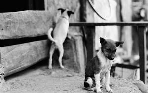 犬もそれぞれ