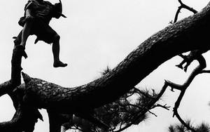木の上に男の子