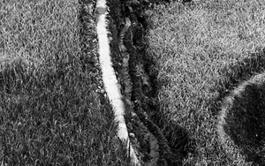 田圃の中の小径