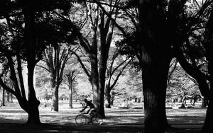木々の中を走る自転車