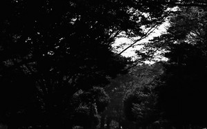 代々木公園の自転車