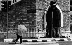 Umbrella On The Zebra Crossing
