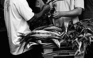 Fish Jobbers