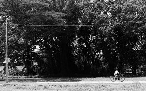 Bicycle In The Country Road