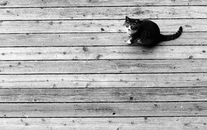 Cat On The Wooden Floor