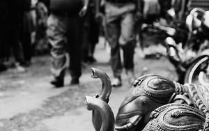 Elephants By The Roadside