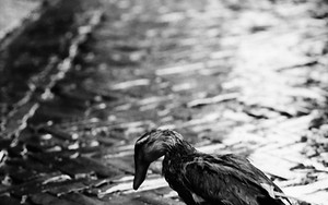 Bird After The Rain