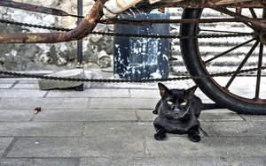 Black Cat Under The Wheels