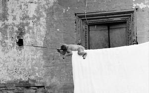Monkey And Washing