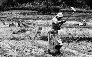 Woman Working In The Fields