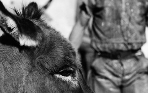 Donkey With Lonely Eyes