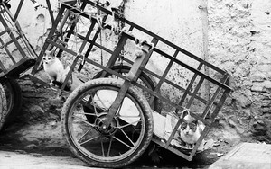 Cats On The Cart