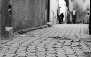 Cat In Medina