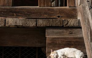 階段の端で寝る猫