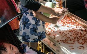 Goldfish Scooping Game