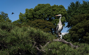 Egret On Tree