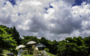 Four Umbrellas In Shikina-En Garden