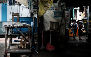 Cat In A Corner Of A Market