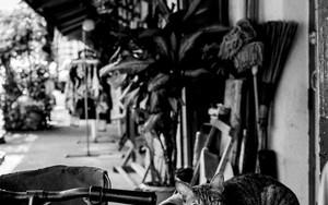 バイクの上の猫