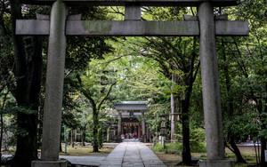 赤坂氷川神社の参道