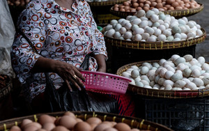 Woman Surrounded By Many Eggs