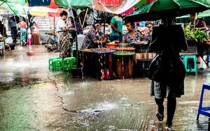 市場の中の傘