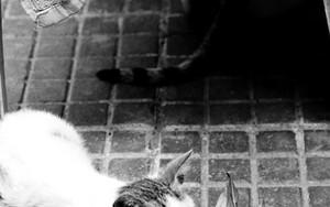 猫と丸められた葉っぱ