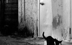Cat Walking By The Wall