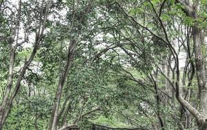 林試の森公園の橋