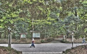 Woman Walking The Approach Of Meiji Jingu