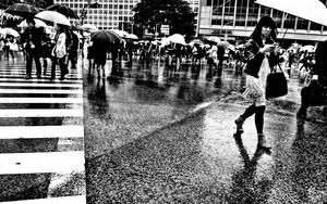 Pedestrian Scramble In Shibuya