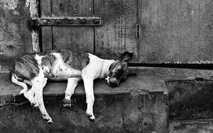 Sleeping Dog By The Wayside