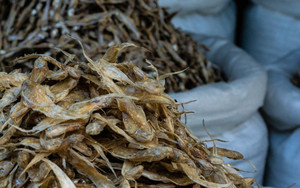 Pile Of Dried Fishes