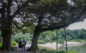 木の間の歩くふたり