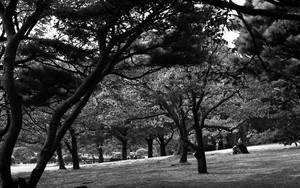 木々の中に座る男
