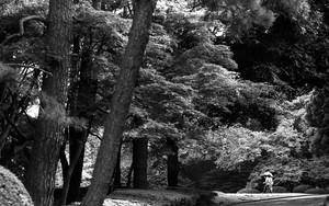 木々の中の道を歩くカップル
