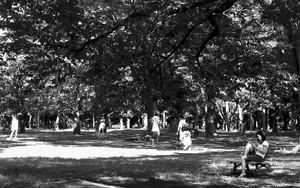 代々木公園で読書する女