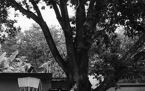 木の下の天秤棒